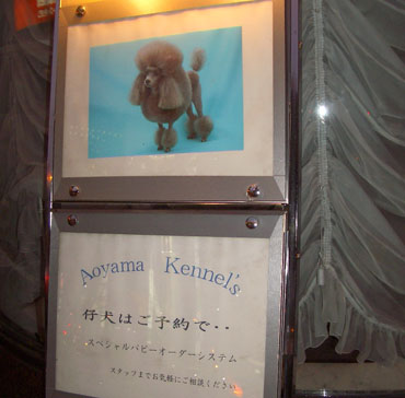 AoyamaKennel.jpg